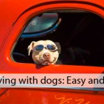 Moving with dogs checklist
