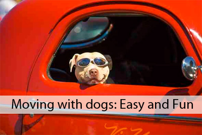 Moving with your dogs checklist