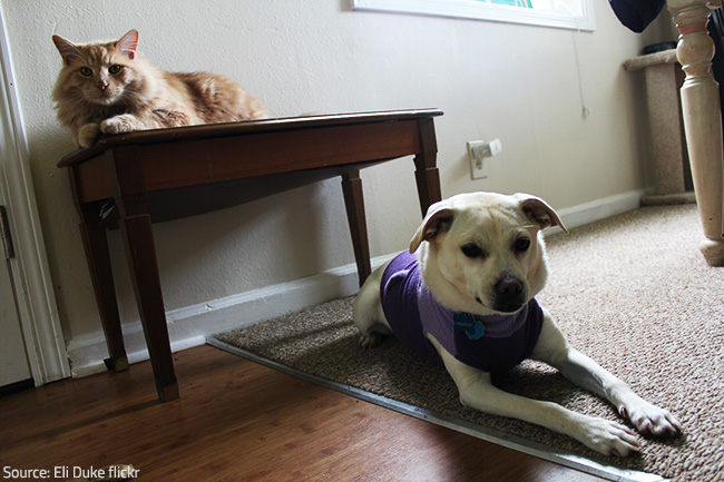 Monitor your pet closely if they seem depressed, refuse to eat or exhibit unusual behavior after a move.