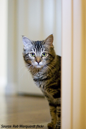 Moving with Cats to a New Home: How Moving Affects Cats